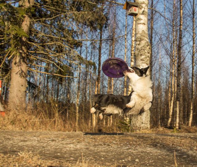 iltafrisbee-2-normal.jpg