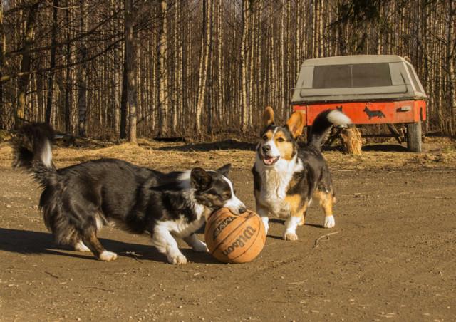 pallolla-normal.jpg