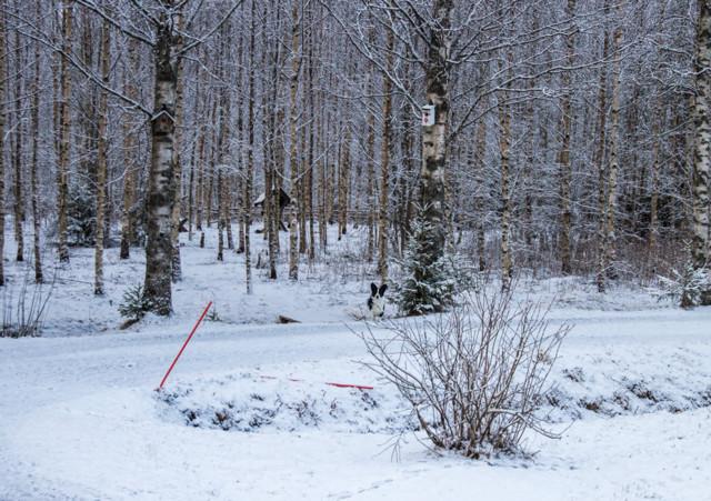 Luminen%20vappu-normal.jpg
