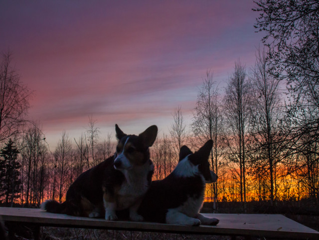 auringonlaskua-4-normal.jpg