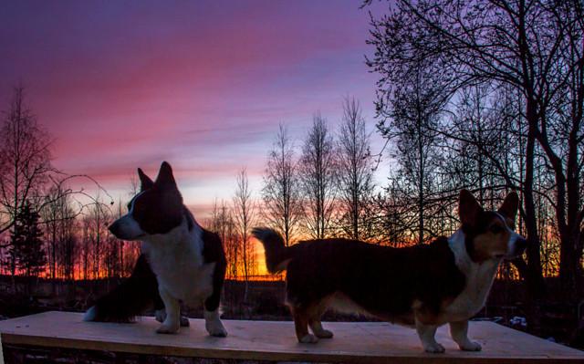 auringonlaskua-12-normal.jpg