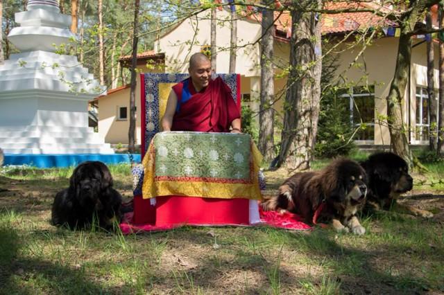 Rinpoche_4-normal.jpg