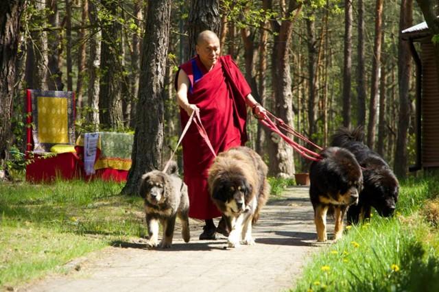Rinpoche_5-normal.jpg
