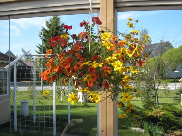 Kukkaset%20008-normal.jpg