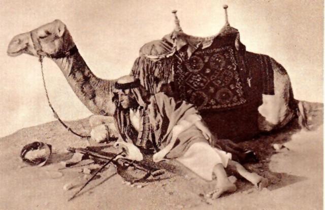 xtel_camel-normal.jpg