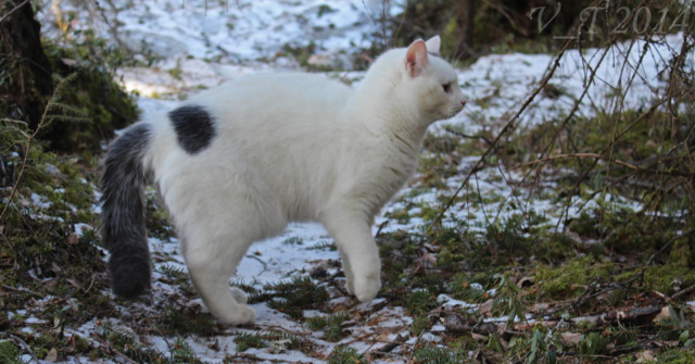 Kissa%20kentsu-normal.jpg