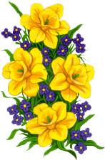 Narsissit.jpg
