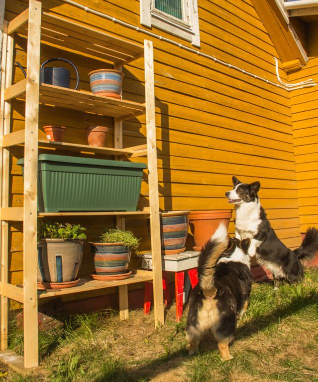puutarhaa-5-normal.jpg
