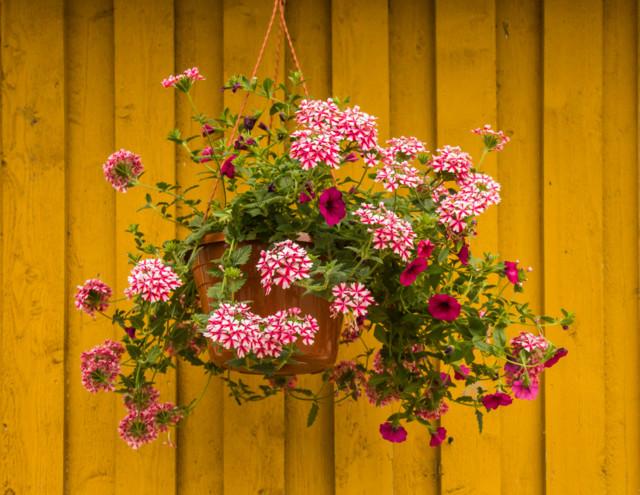 kukkaset-normal.jpg