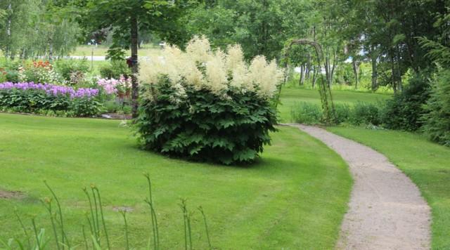 puutarhan%C3%A4kym%C3%A4-normal.jpg