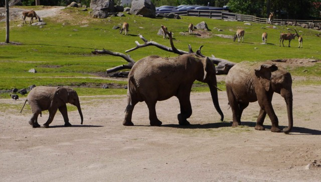 Elefantit%20v-normal.jpg