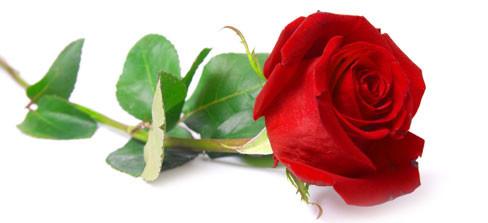 aromaterapia-ruusu-01.jpg