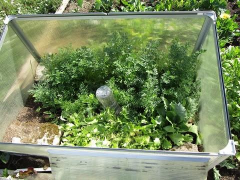 piha_porkkana-salaatti-normal.jpg