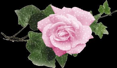 Ruusu%20%E2%80%93%20Kopio-normal.jpg