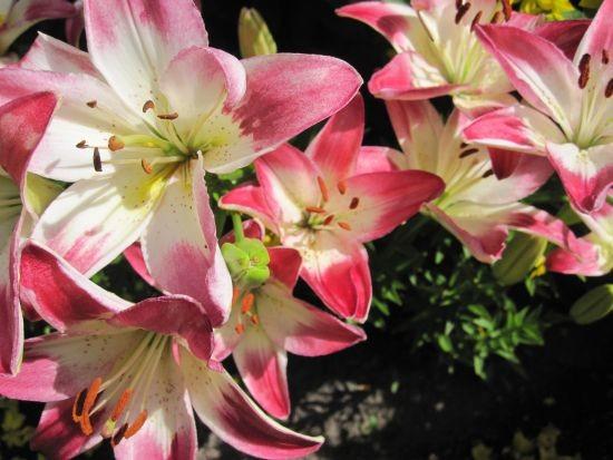 kukkaloistoa1-normal.jpg