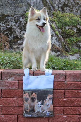 bag2-normal.jpg