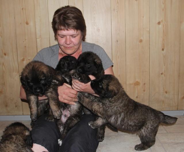 Pups%20near%206weeks%20003-normal.jpg