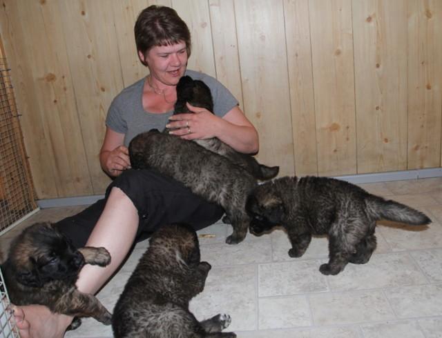 Pups%20near%206weeks%20017-normal.jpg