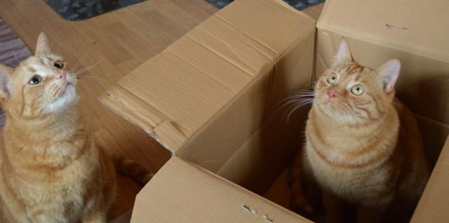 laatikko-normal.jpg