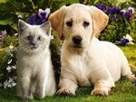Kissa%20ja%20koira%202-normal.jpg