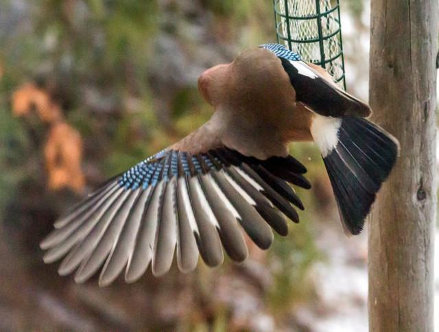 lintulaudalla-1.jpg