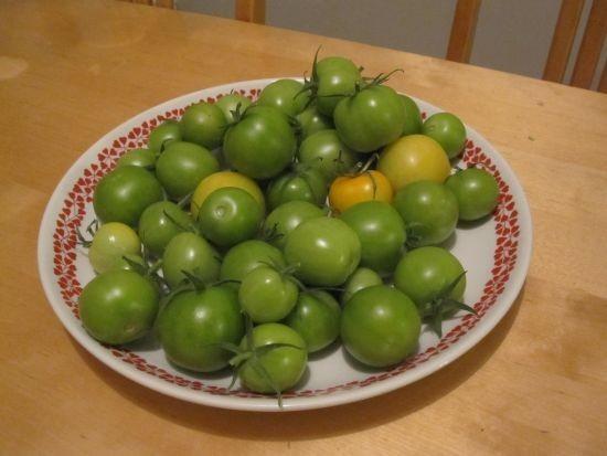 tomaatitsyyskuussa.jpg