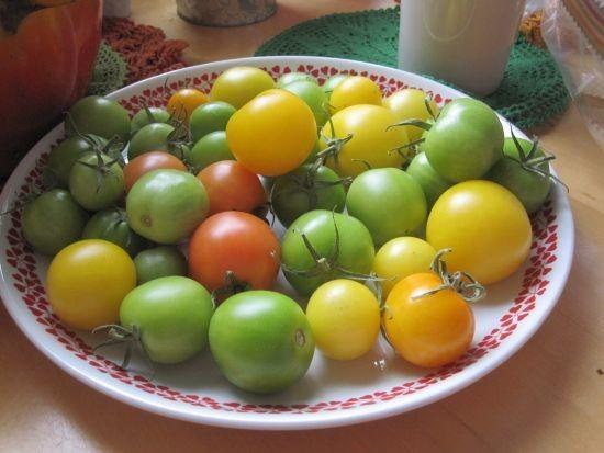 tomaatitviikkoamyohemmin.jpg