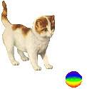 Kissa%20ja%20pallo.jpg