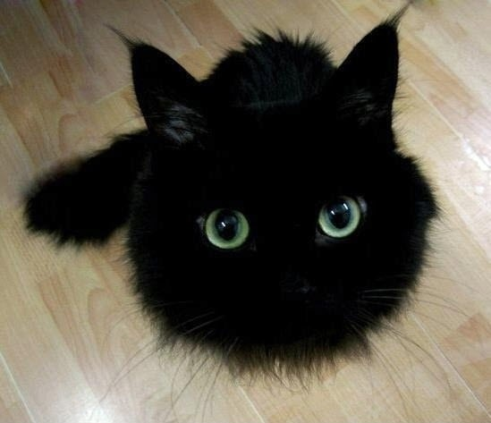 a.baa-Pretty-black-kitten.jpg