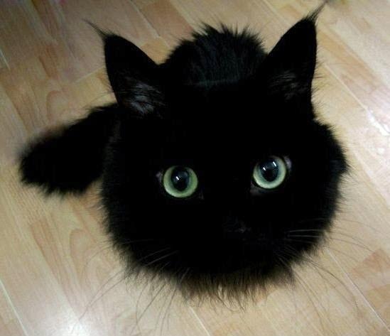 a.baa-Pretty-black-kitten.jpg