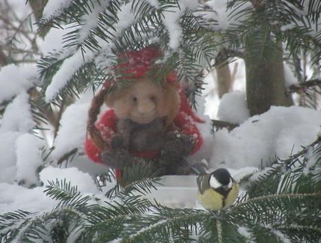 puussa.jpg