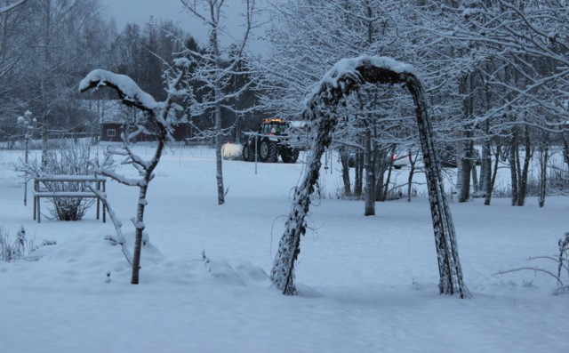lumipuutarha.jpg