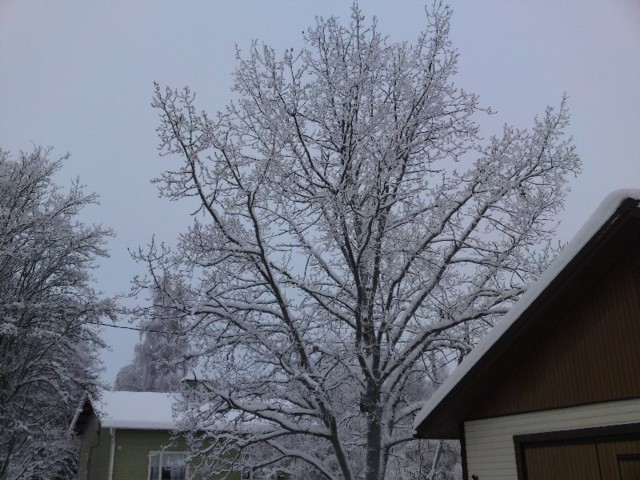 Talvi.jpg
