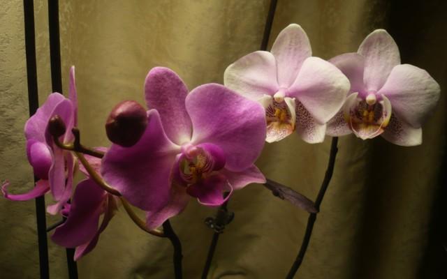 kukkia%20-15%20009.jpg
