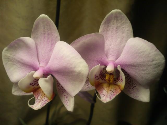kukkia%20-15%20006.jpg