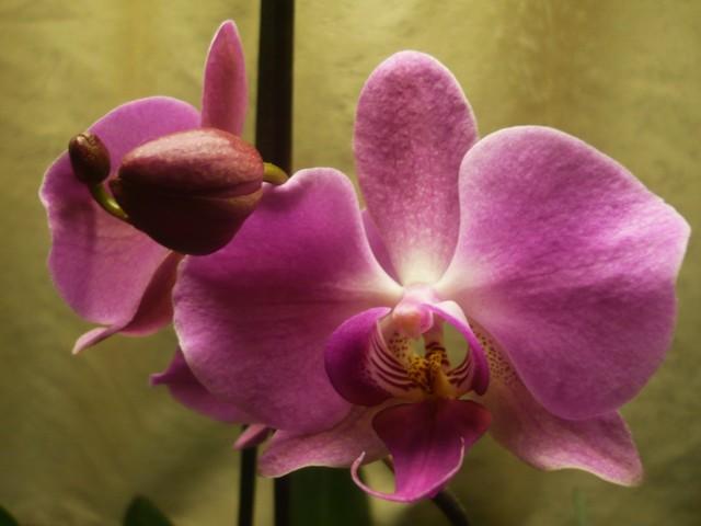 kukkia%20-15%20011.jpg