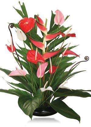 Kukkakimppu.jpg
