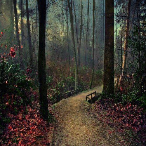 forest-bridge-port-moody-canada.jpg