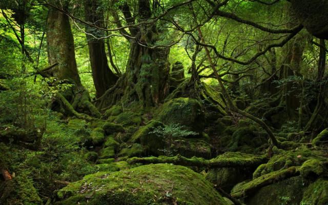 1-woods.jpg