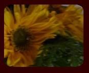 auringonkukat.jpg