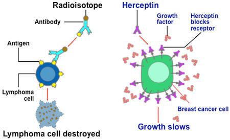 herceptin-rew.jpg