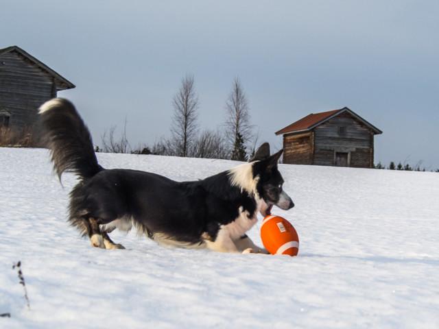 pallofrisbee-8.jpg