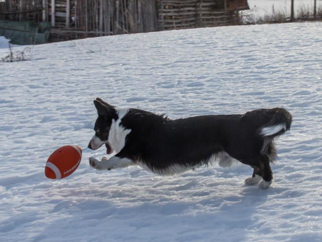 pallofrisbee-10.jpg