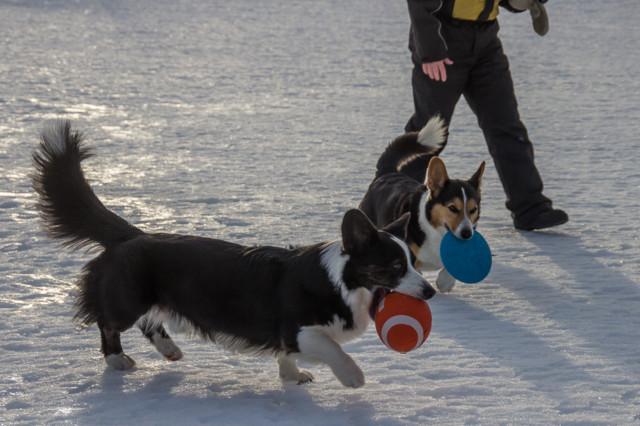 pallofrisbee-12.jpg