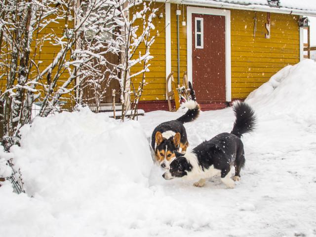 lumisadetta-3.jpg