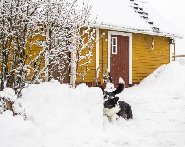 lumisadetta-4.jpg