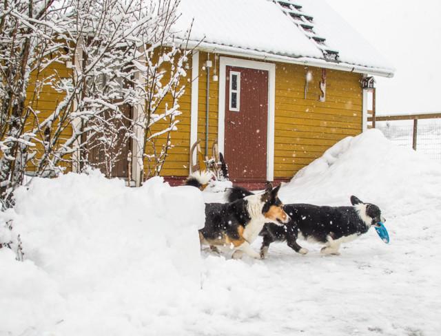 lumisadetta-6.jpg
