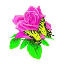 pinkkiruusu.jpg