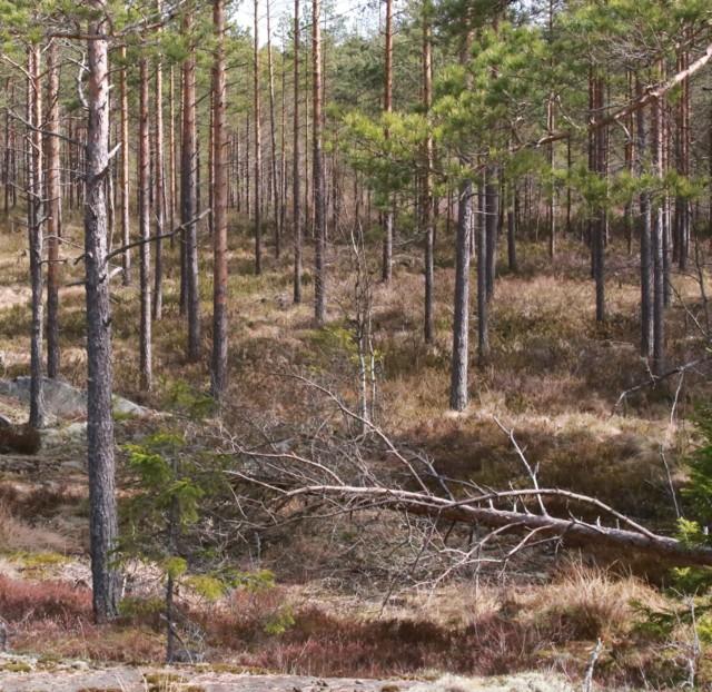 Metson%20soidinpaikka%2C%20teeren%20lent