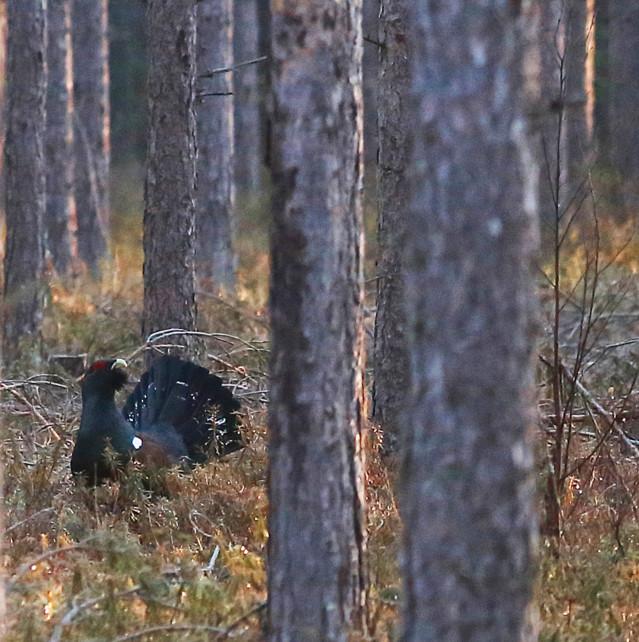 Metsot%20soitimella%20maassa%20ja%20puus
